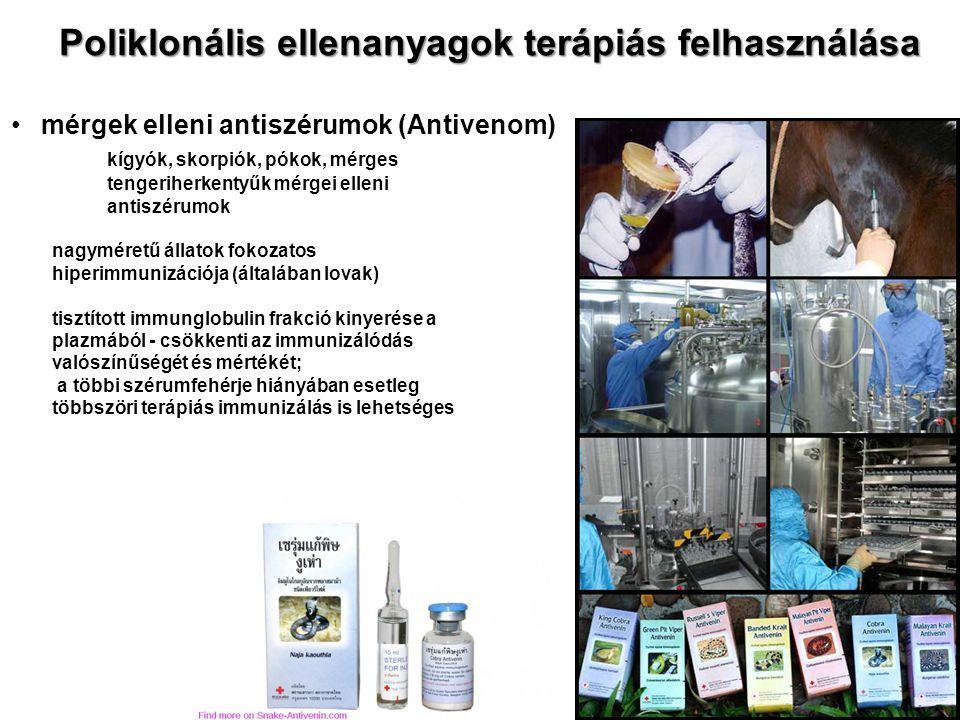 Poliklonális ellenanyagok terápiás felhasználása