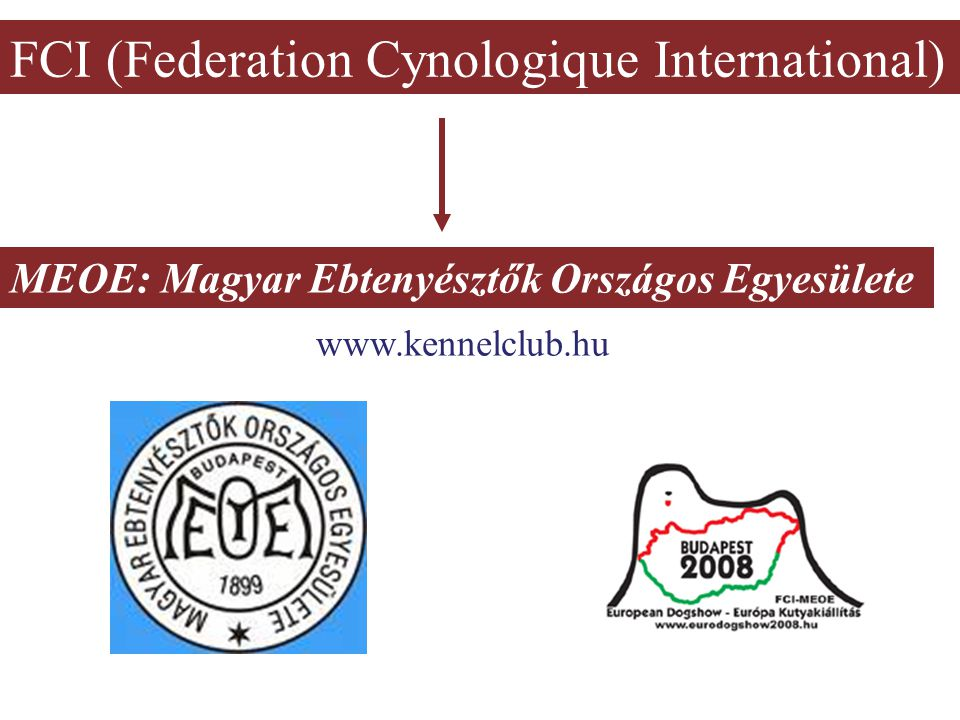 FCI (Federation Cynologique International)