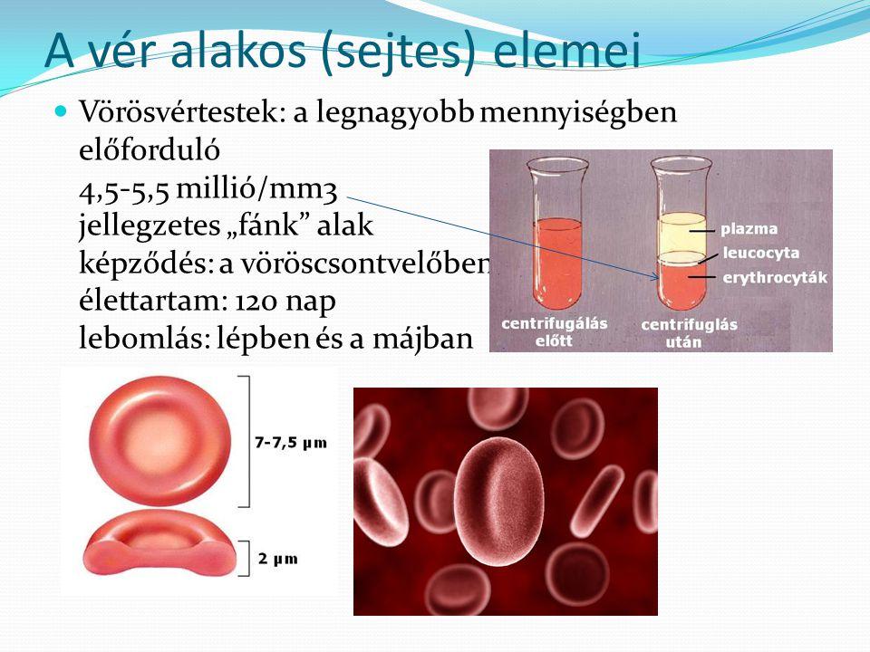 A vér alakos (sejtes) elemei