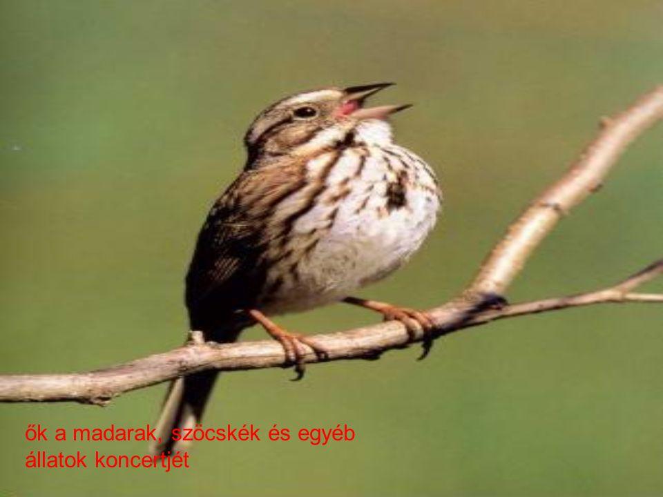 ők a madarak, szöcskék és egyéb állatok koncertjét
