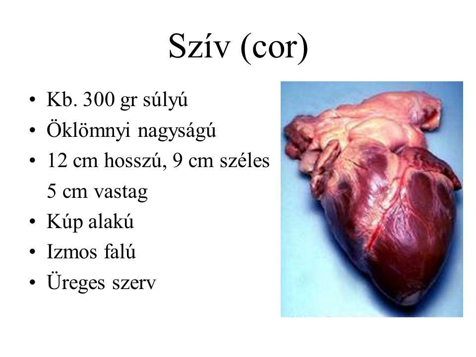 Szív (cor) Kb. 300 gr súlyú Öklömnyi nagyságú