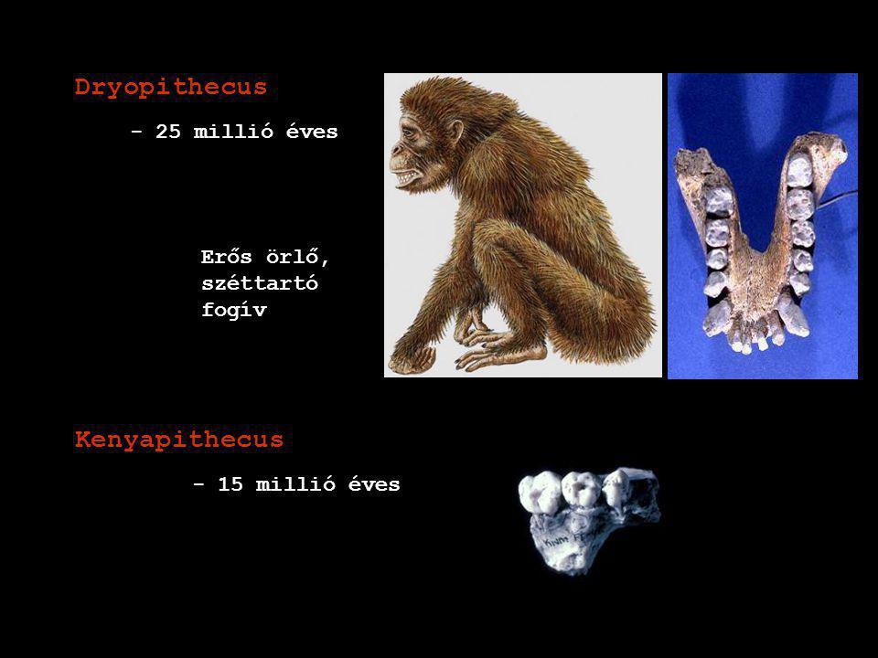 Dryopithecus Kenyapithecus