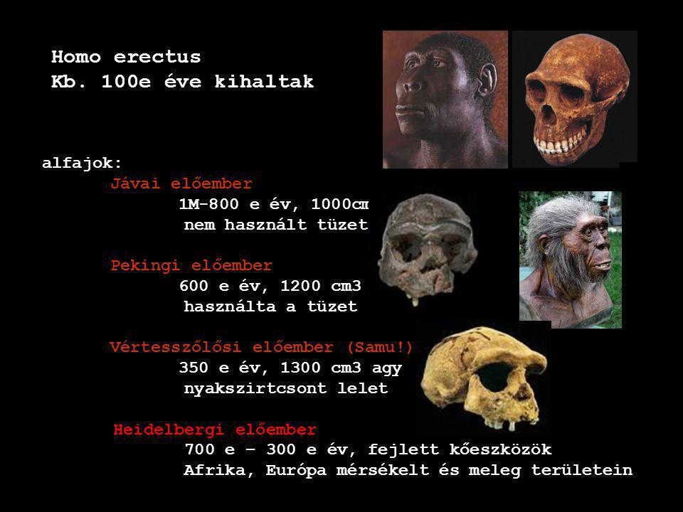 Homo erectus Kb. 100e éve kihaltak