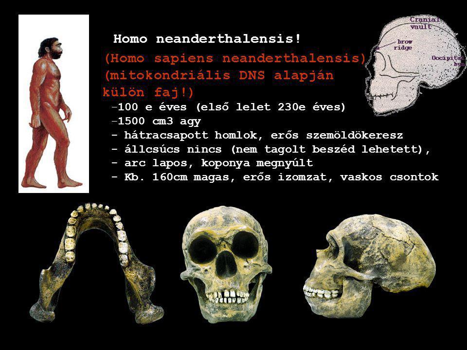 Homo neanderthalensis!