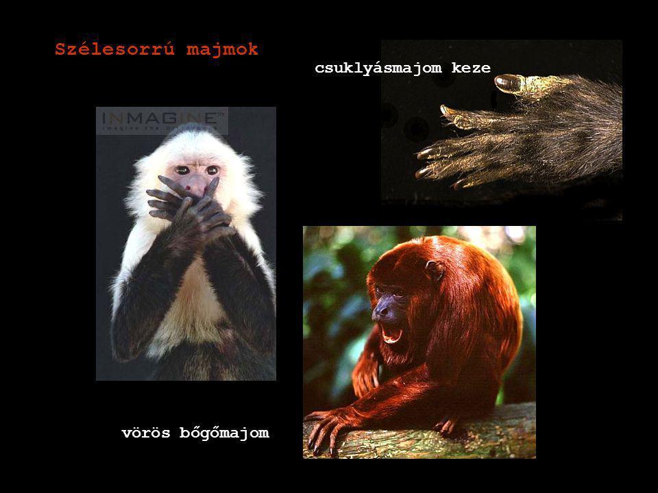 Szélesorrú majmok csuklyásmajom keze vörös bőgőmajom