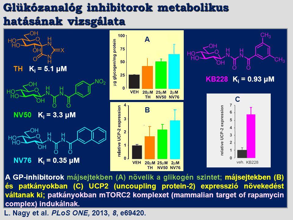 Glükózanalóg inhibitorok metabolikus hatásának vizsgálata