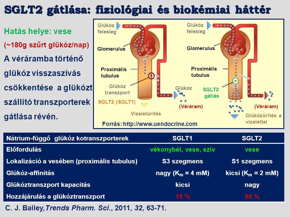 SGLT2 gátlása: fiziológiai és biokémiai háttér