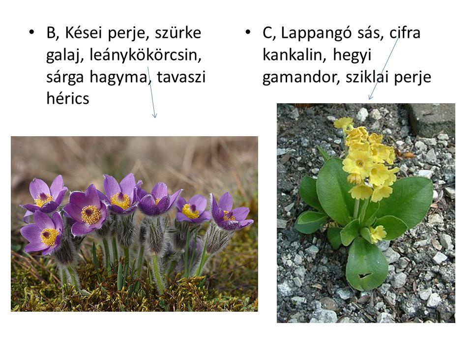 B, Kései perje, szürke galaj, leánykökörcsin, sárga hagyma, tavaszi hérics