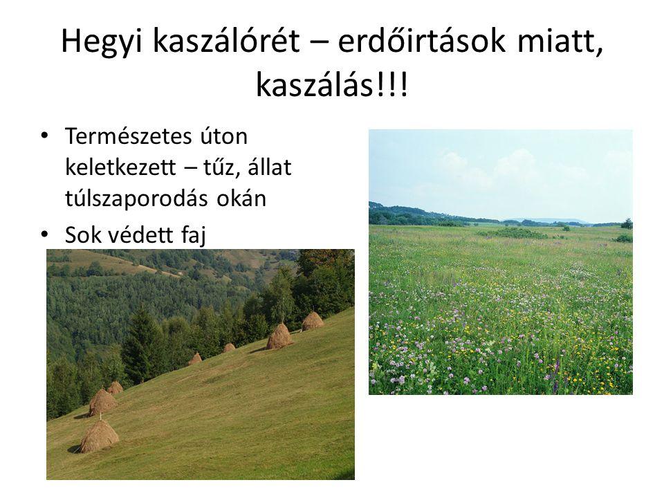 Hegyi kaszálórét – erdőirtások miatt, kaszálás!!!