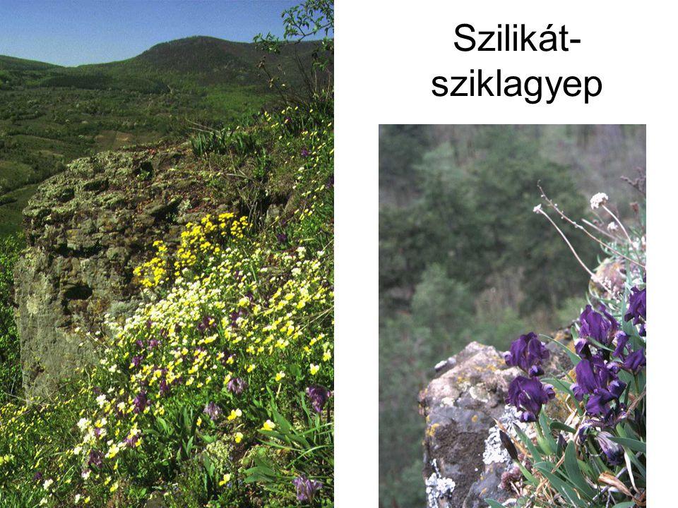 Szilikát- sziklagyep Bal oldalon: A Füzéri várhegy szilikátsziklagyepje (Füzér, 1994.) ELOH0254.