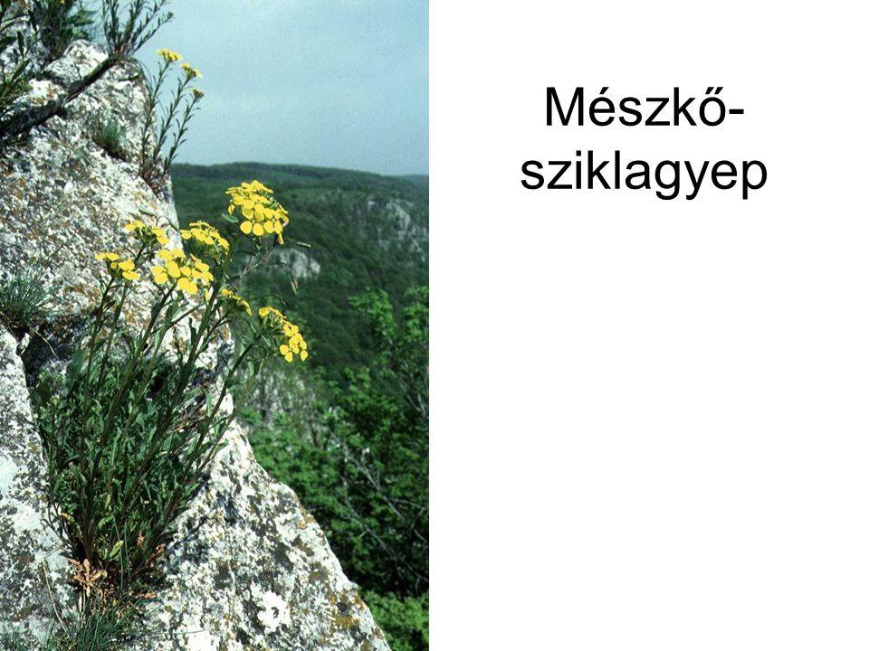 Mészkő- sziklagyep Kárpáti mészkősziklagyep (Bükk Bél-kő, 1995.) ELOH0859