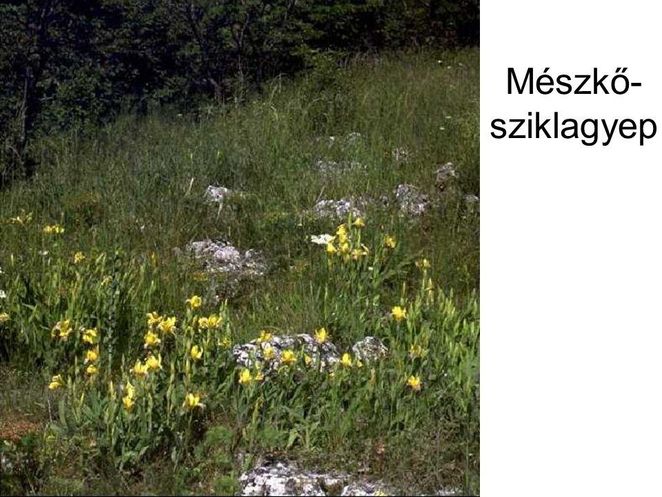 Mészkő- sziklagyep Sziklagyep (mészko) HAZN