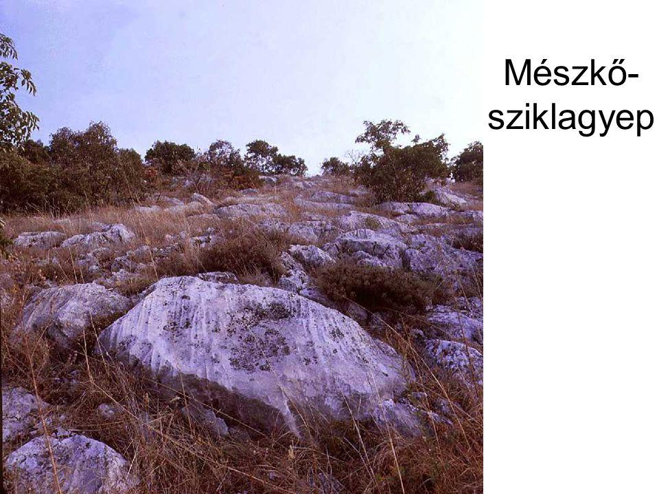Mészkő- sziklagyep Dalmát csenkeszes sziklagyep (Nagyharsányi-hegy, 1986.) ELOH242