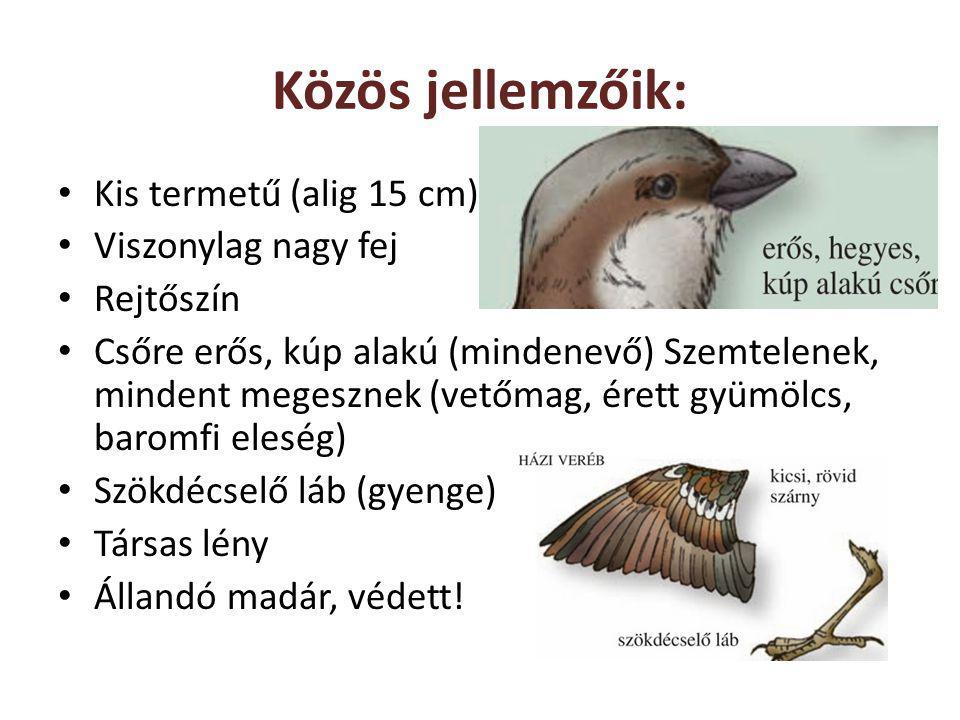 Közös jellemzőik: Kis termetű (alig 15 cm) Viszonylag nagy fej