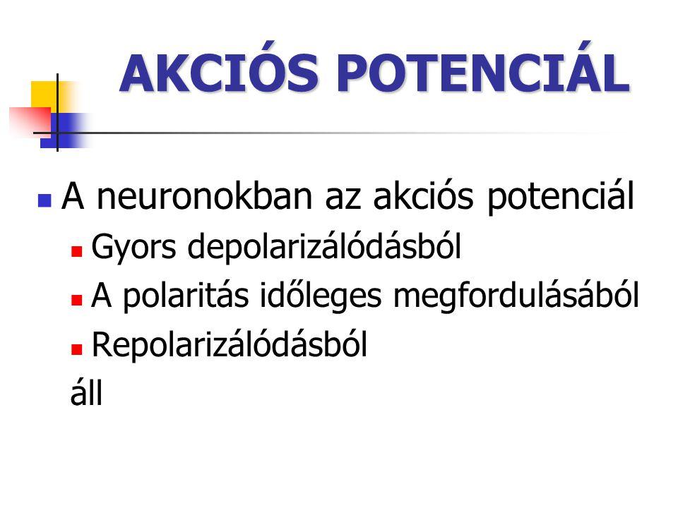 AKCIÓS POTENCIÁL A neuronokban az akciós potenciál