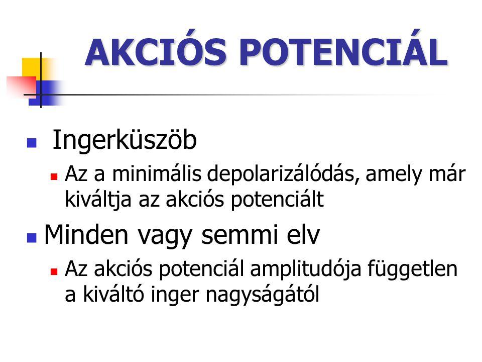 AKCIÓS POTENCIÁL Ingerküszöb Minden vagy semmi elv