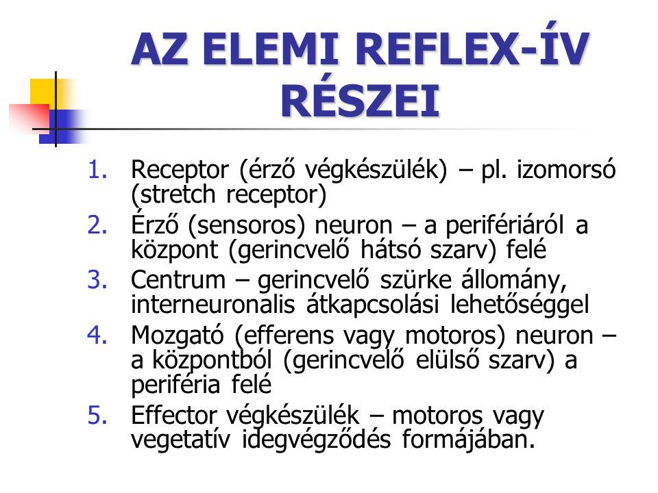 AZ ELEMI REFLEX-ÍV RÉSZEI