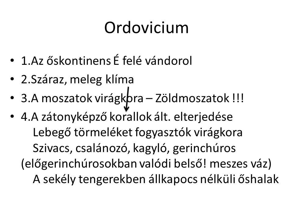 Ordovicium 1.Az őskontinens É felé vándorol 2.Száraz, meleg klíma