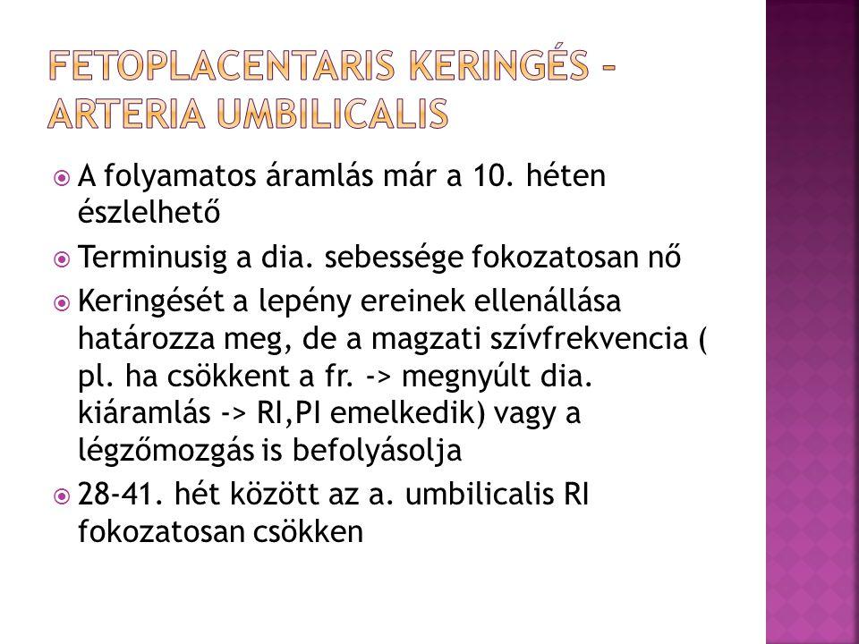 Fetoplacentaris keringés – Arteria umbilicalis