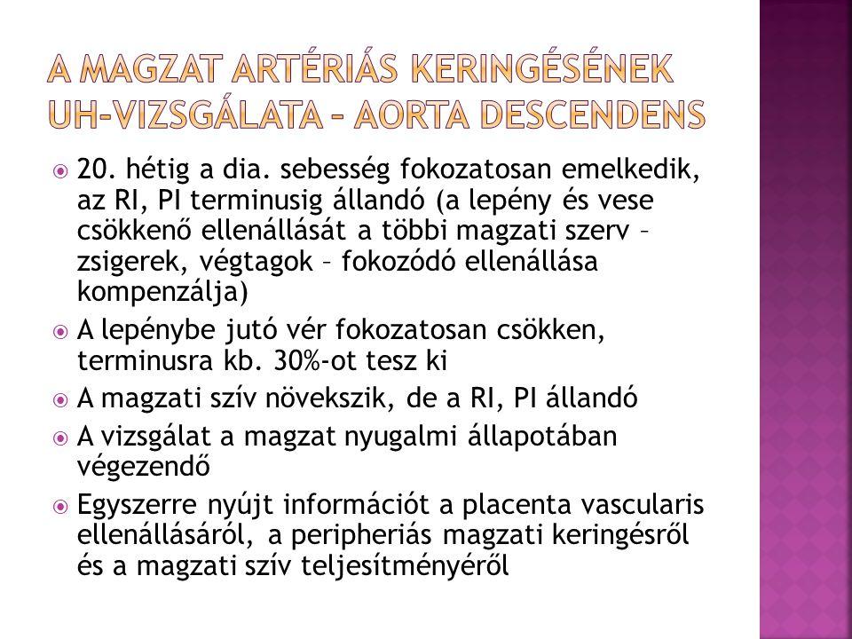 A magzat artériás keringésének UH-vizsgálata – aorta descendens