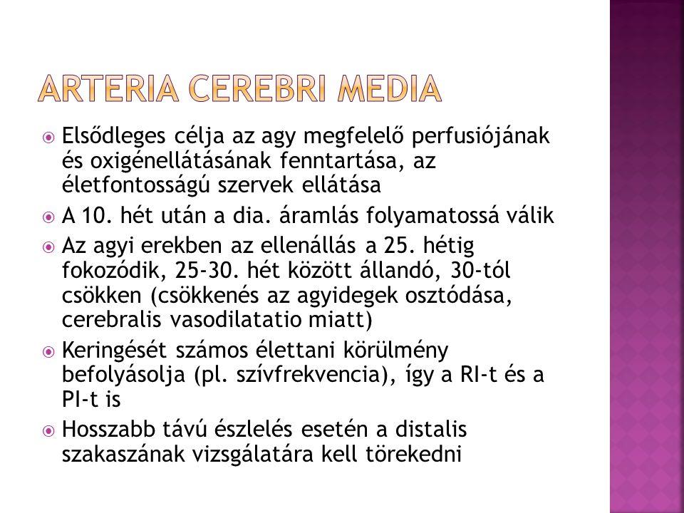ARTERIA CEREBRI MEDIA Elsődleges célja az agy megfelelő perfusiójának és oxigénellátásának fenntartása, az életfontosságú szervek ellátása.