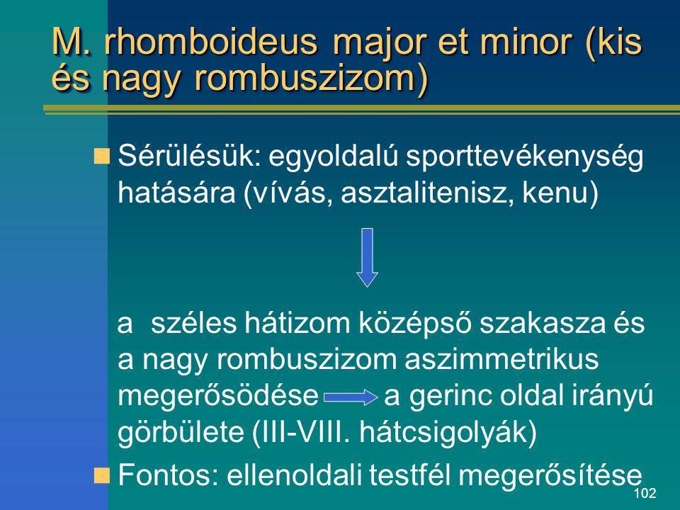 M. rhomboideus major et minor (kis és nagy rombuszizom)