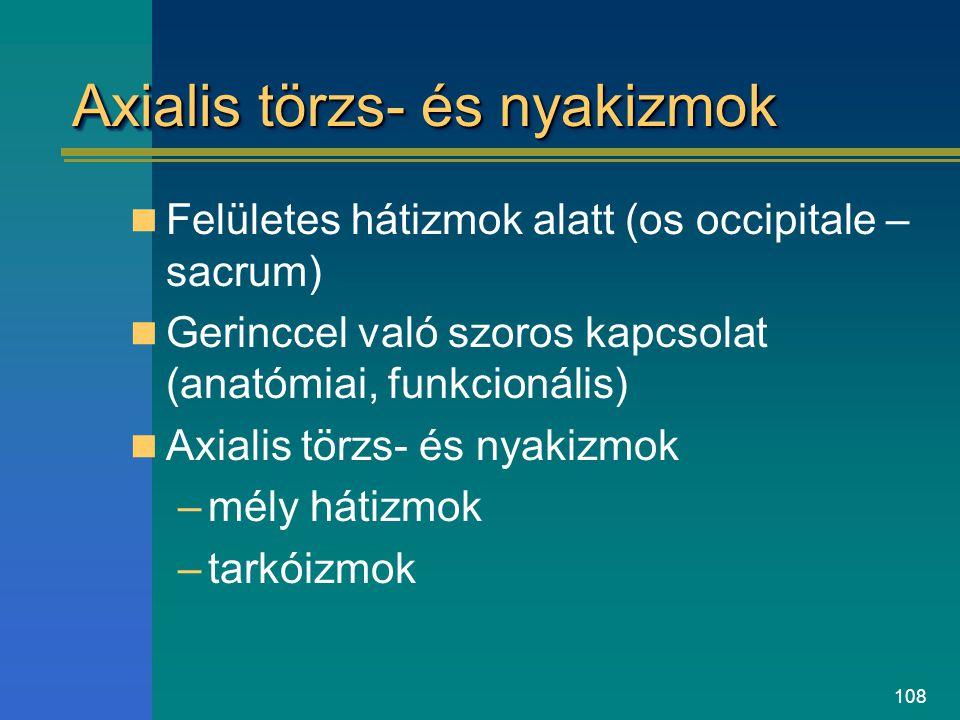 Axialis törzs- és nyakizmok