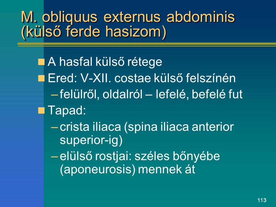 M. obliquus externus abdominis (külső ferde hasizom)
