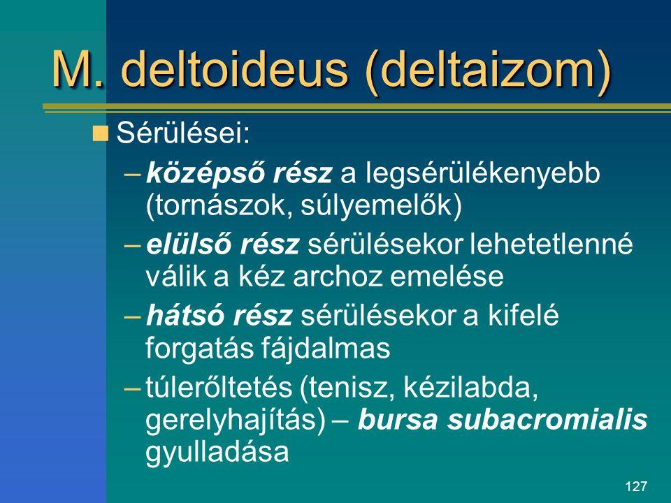 M. deltoideus (deltaizom)