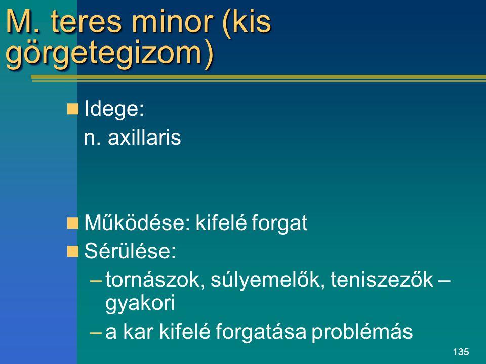 M. teres minor (kis görgetegizom)