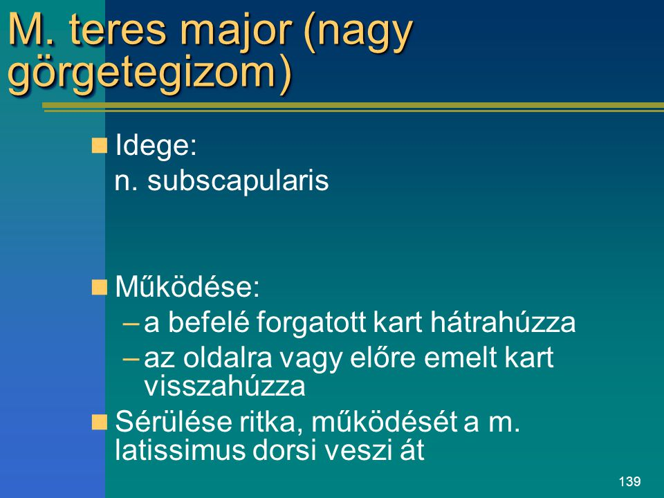 M. teres major (nagy görgetegizom)