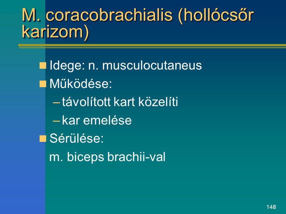 M. coracobrachialis (hollócsőr karizom)