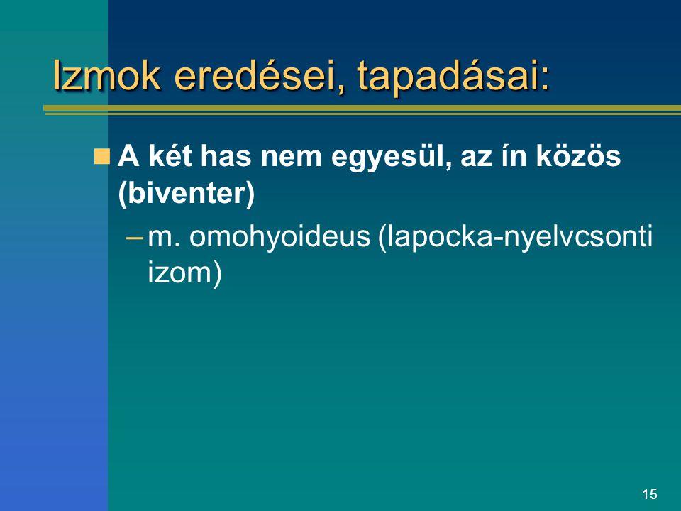 Izmok eredései, tapadásai: