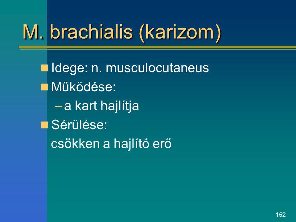 M. brachialis (karizom)