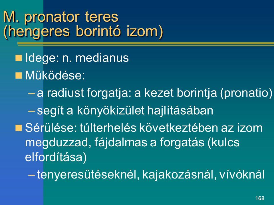 M. pronator teres (hengeres borintó izom)