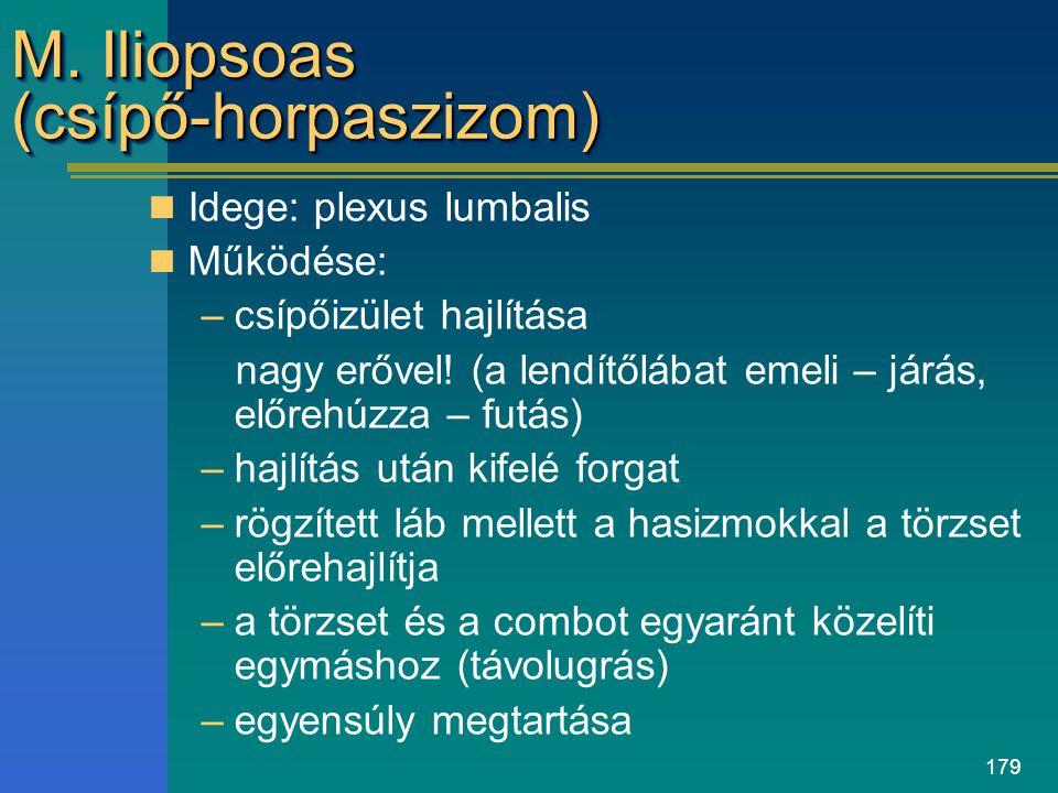 M. Iliopsoas (csípő-horpaszizom)
