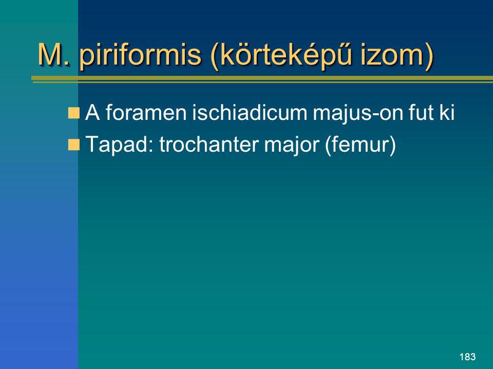 M. piriformis (körteképű izom)