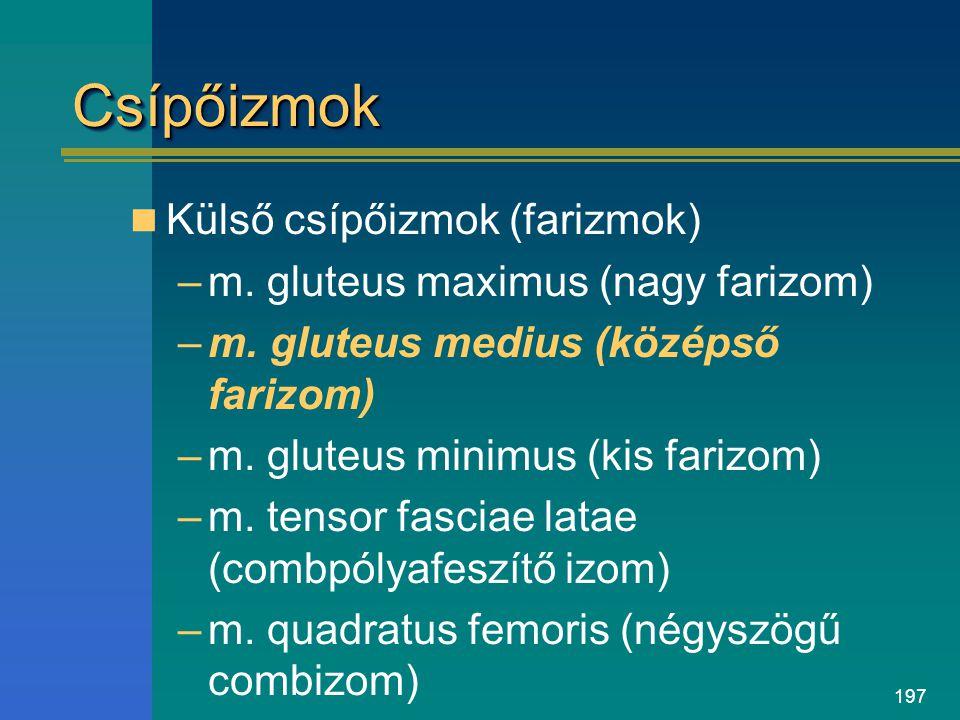 Csípőizmok Külső csípőizmok (farizmok)
