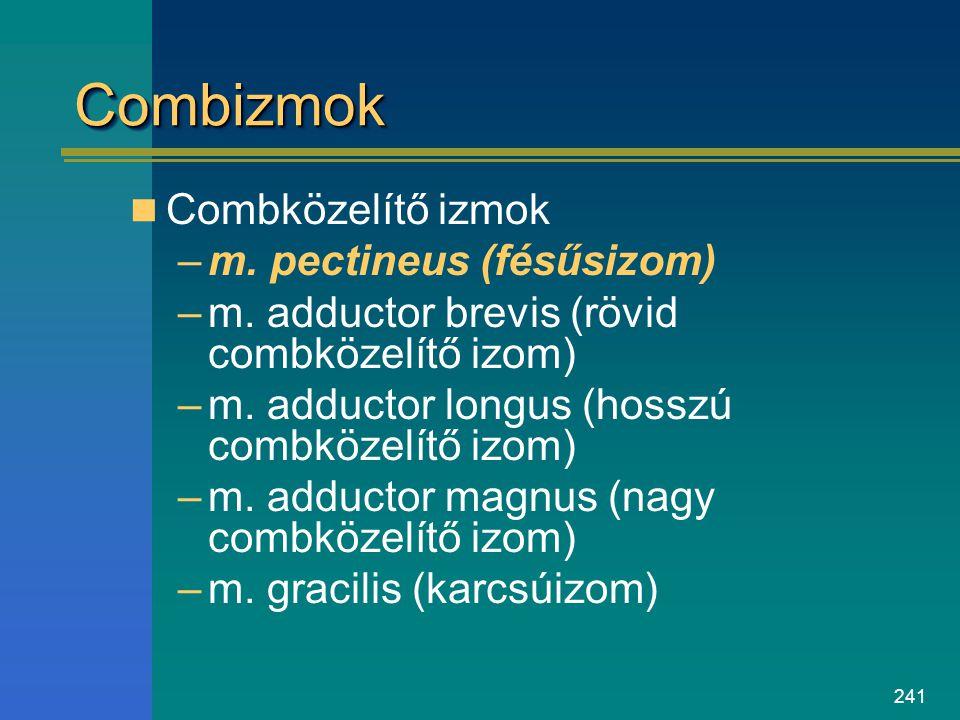 Combizmok Combközelítő izmok m. pectineus (fésűsizom)