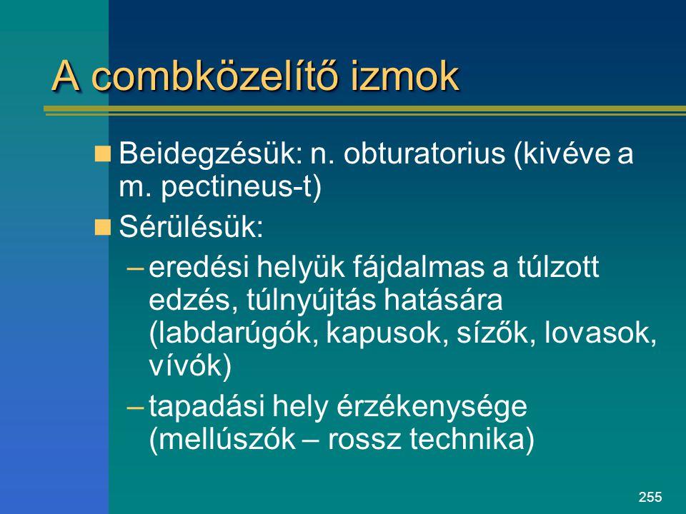 A combközelítő izmok Beidegzésük: n. obturatorius (kivéve a m. pectineus-t) Sérülésük: