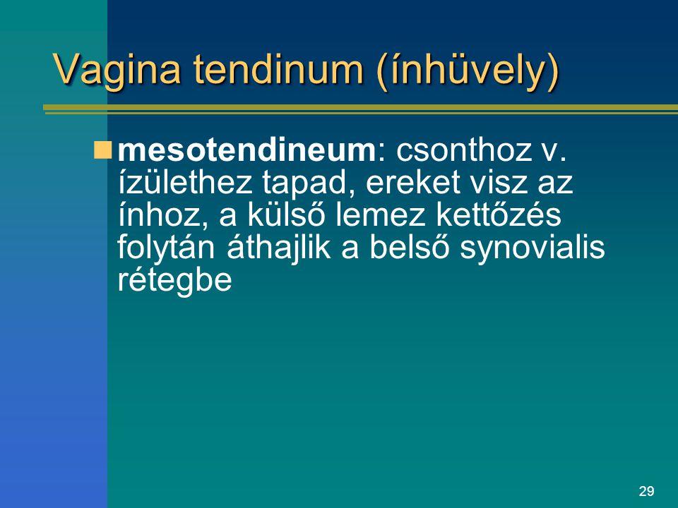 Vagina tendinum (ínhüvely)