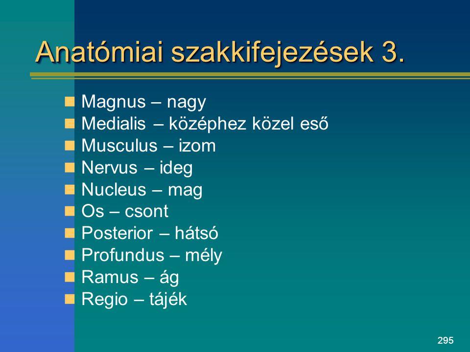 Anatómiai szakkifejezések 3.