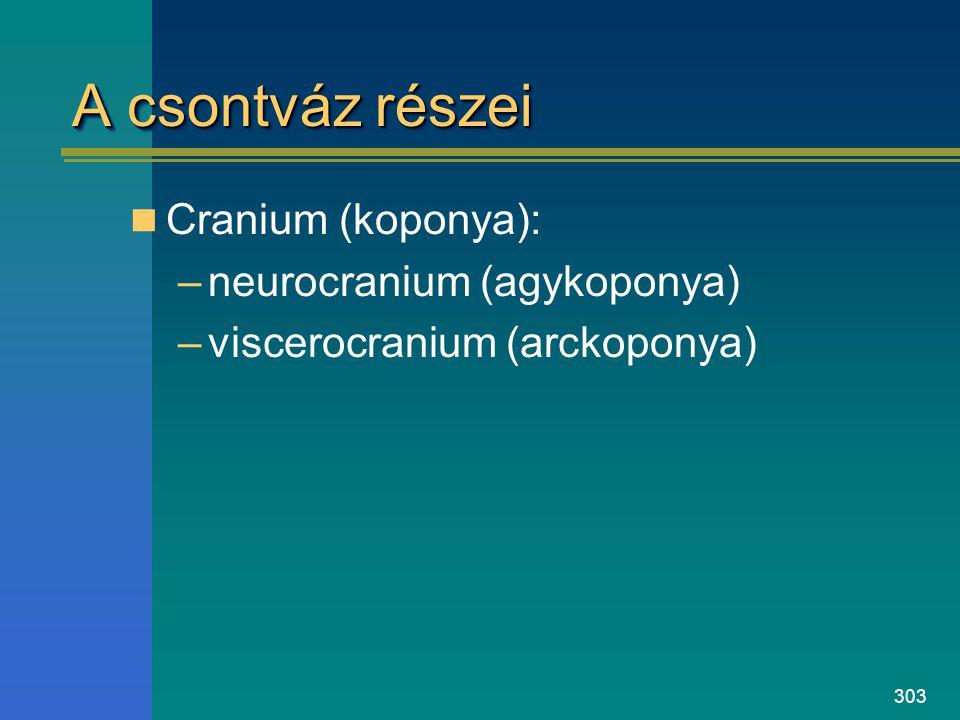 A csontváz részei Cranium (koponya): neurocranium (agykoponya)