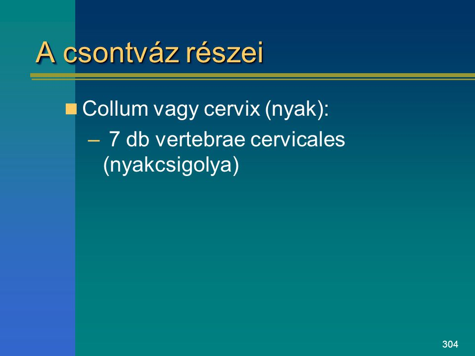 A csontváz részei Collum vagy cervix (nyak):