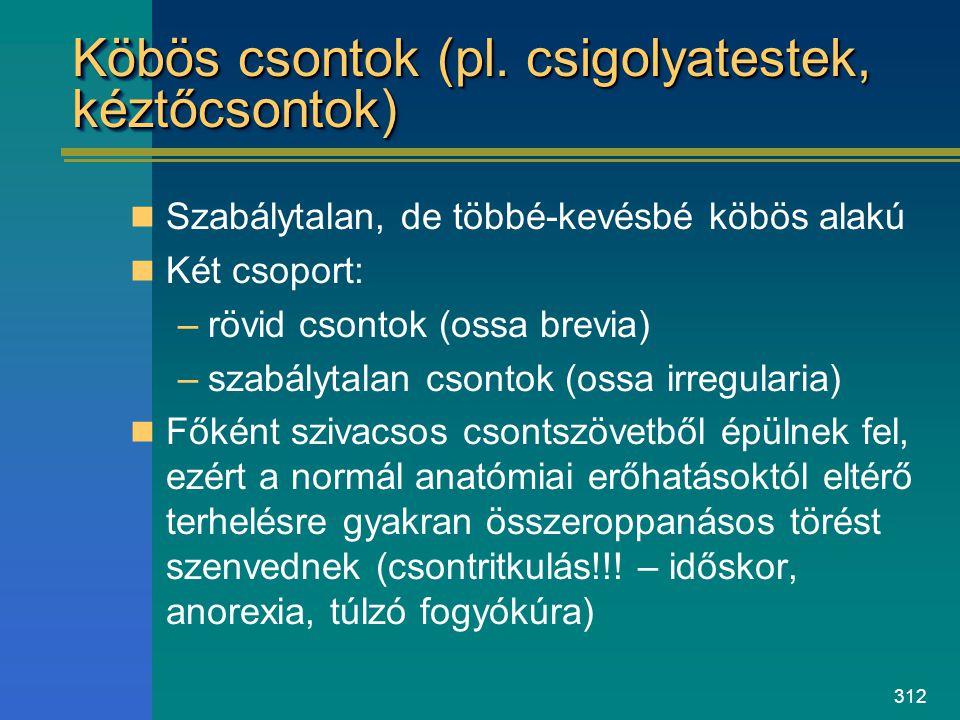 Köbös csontok (pl. csigolyatestek, kéztőcsontok)