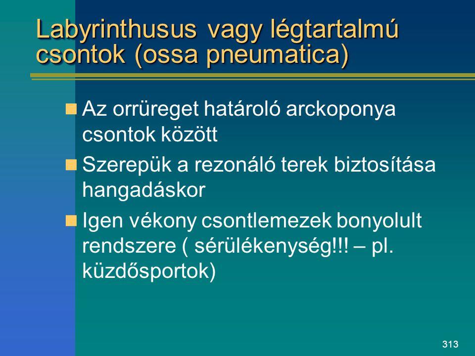 Labyrinthusus vagy légtartalmú csontok (ossa pneumatica)