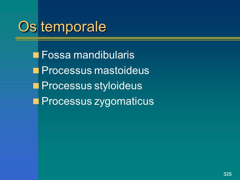 Os temporale Fossa mandibularis Processus mastoideus