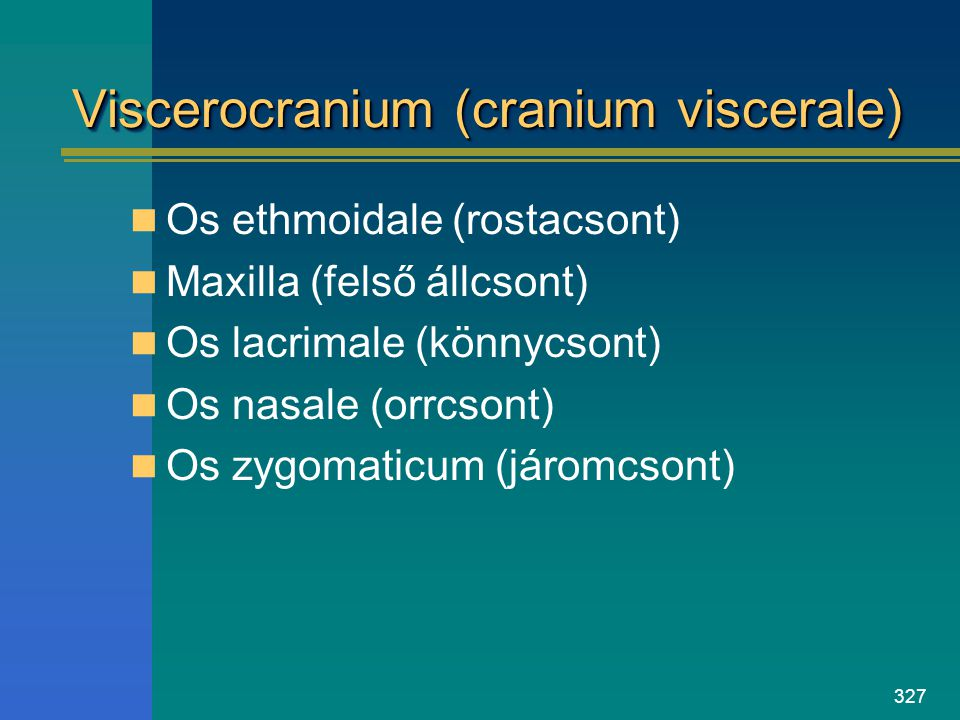 Viscerocranium (cranium viscerale)