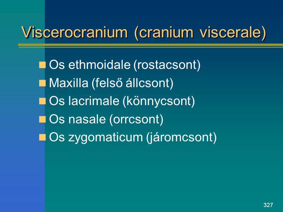 Viscerocranium (cranium viscerale)