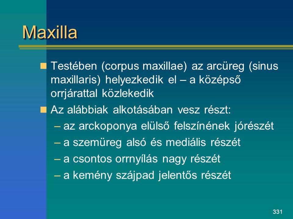 Maxilla Testében (corpus maxillae) az arcüreg (sinus maxillaris) helyezkedik el – a középső orrjárattal közlekedik.